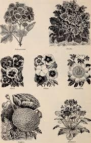 File:Alfred Bridgeman seeds (1900) (20555041705).jpg - Wikimedia ...