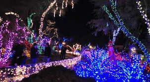 Christmas Cacti In Las Vegas Shardsofblue