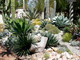 Small Picture Best 25 Cactus Succulent Garden Designs Plant Combinations