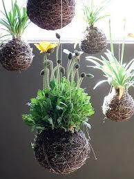 Terrace and Garden: Beautiful Hanging Garden Ideas - Hanging Gardening