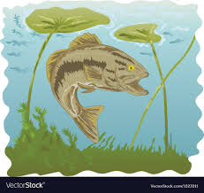 largemouth bass jumping. Plain Largemouth Largemouth Bass Jumping Vector Image To Bass Jumping I