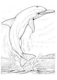 Kleurplaat Dolfijnen 7134 Kleurplaten