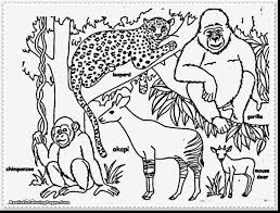Small Picture cartoon jungle animals coloring pages alphabrainsznet