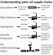 palm oil investigations