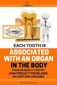 Each Tooth Is Associated With An Organ In The Body Pain In