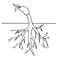 Plant Life Cycle Clipart Worksheet Coloring Page Homeschool Clipart