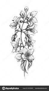 Floral Sketch Designs Jasmine Flowers Tattoo Designs Hand Drawn Blossoming