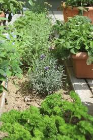 Herb Garden Design  Choosing A Site For Your Herb Garden