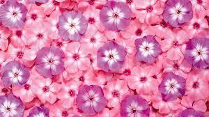 pink flower desktop wallpaper wallpapersafari