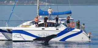 Image result for whale watch hervey bay