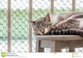 Katze Die Durch Ein Balkon S Fenster Schläft Stockbild Bild Von