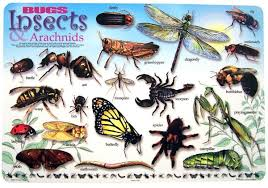 Bugs And Insects Placemat