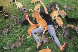 hundreds of cats. Unique Cats Instagram  Izabellajaay With Hundreds Of Cats Simplemost