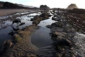 oregon coast living strange oregon coast history legend of seal rock sea monsters