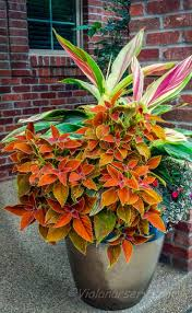 Small Picture 1598 best Container gardening ideas images on Pinterest Garden