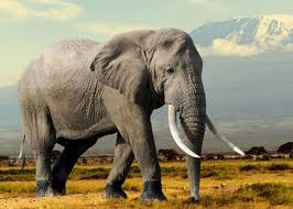 essay on elephant for children and students elephant essay 2 150 words