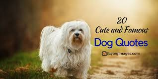 cute dog quotes and sayings. Simple Sayings Dogquotes For Cute Dog Quotes And Sayings T