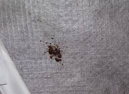 Small Brown Bugs In Bedroom How To Detect Bedbugs Bed Bug Detection