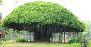 large artificial outdoor trees although its a but we would like to dish it out interior large artificial outdoor trees