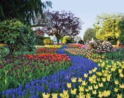 roozengaarde display gardens skagit valley tulip festival near mt vernon wa been there in 2018 tulip festival tulips and washington