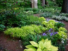Small Picture Woodland shade garden Gardening Gone Wild Photo Contest