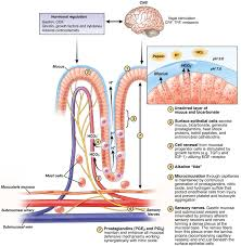 gastric mucosal defense and
