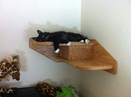 Corner Cat Shelves