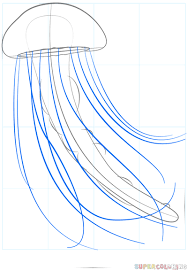 jellyfish drawing easy. Contemporary Drawing Step 5 In Jellyfish Drawing Easy