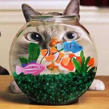 Funny Fish Tank Decorations Tank Leotard Picture More Detailed Picture About Aquarium