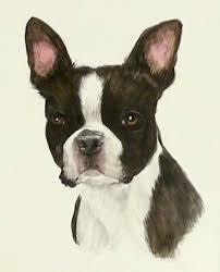 boston terrier watercolor vanda lavar