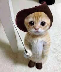 cute kittens in costumes. Brilliant Kittens TOP 30 Cute Cats U2013 Cat With Kittens In Costumes H