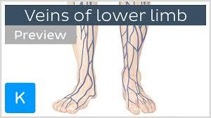 Leg Vein Chart Veins Of The Lower Extremity Preview Human Anatomy Kenhub