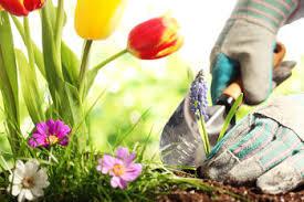 Jardinier, Jardinerie et Jardinage : le métier de Jardinier