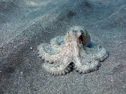 ما هو جمع اخطبوط , كائنات الخطابيط البحرية - رهيبه