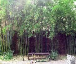 Houston Bamboo Screening Out Neighbor