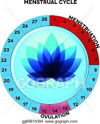 Clip Art Vector Female Menstrual Cycle Chart Stock Eps