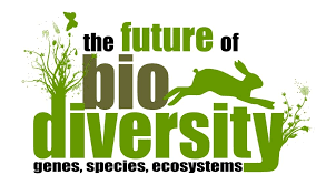 biodiversity and ecosystem loss global perspectives there are a number of facts that are related to biodiversity and its loss this is a link to the facts and figures of biodiversity loss