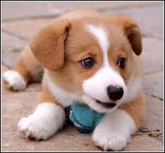 cute baby dog. Brilliant Cute Cute Baby Dogs Images Intended Dog S