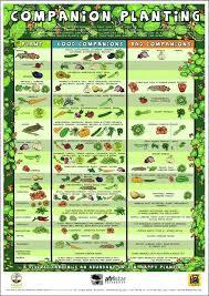 Vegetable Garden Fertilizer Chart Vegetable Garden Fertilizer Tfastl Com
