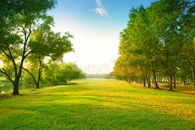green grass field. Download Beautiful Morning Light In Public Park With Green Grass Field An Stock Image - S