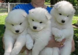 the 10 fluffiest dog breeds on the planet you ll want to hug one right now