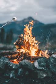 Image result for forest fire image cute