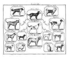 Dog Breed History Chart Buffon And The Beagle