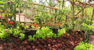 Companion Planting For Top 10 Veggies Grown In Us Farmers