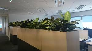 office planter. Plants; Japan MIMI - Office Planter Partitions With Silk Dieff. D