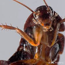 cockroach allergy Archives | AsthmaLog