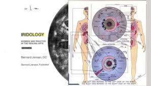 What Is Iridology Chart Iridology Keep Kids Healthy
