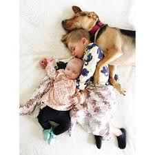 Studie Hunde Als Haustier Machen Babys Gesünder Brigittede