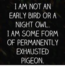 Image result for night owl early bird