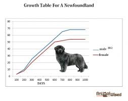 Dog Characteristics Chart What Is The Best Food For A Newfoundland Dog Complete Guide